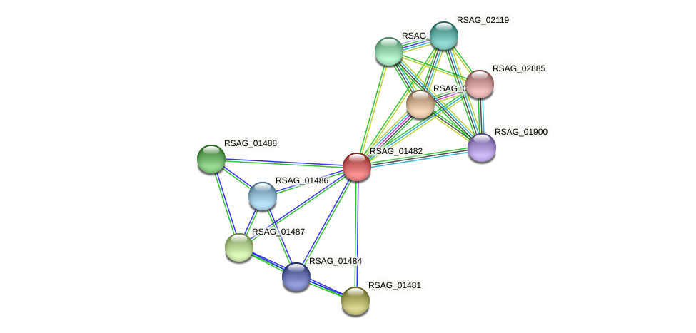 RSAG_01482 protein (Ruminococcus sp. 5139BFAA) - STRING interaction network