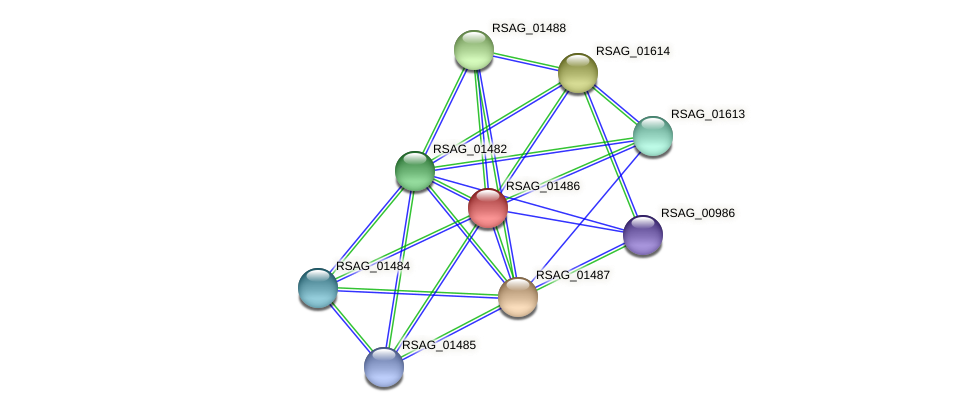 RSAG_01486 protein (Ruminococcus sp. 5139BFAA) - STRING interaction network