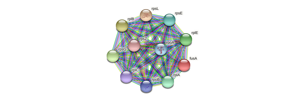 fusA protein (Ruminococcus sp. 5139BFAA) - STRING interaction network