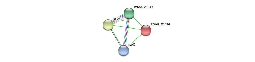 RSAG_01496 protein (Ruminococcus sp. 5139BFAA) - STRING interaction network