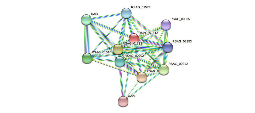 RSAG_01512 protein (Ruminococcus sp. 5139BFAA) - STRING interaction network
