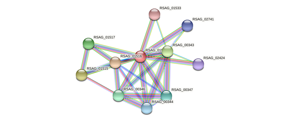 RSAG_01514 protein (Ruminococcus sp. 5139BFAA) - STRING interaction network