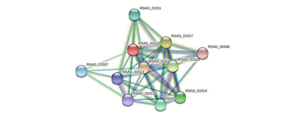 RSAG_01515 protein (Ruminococcus sp. 5139BFAA) - STRING interaction network