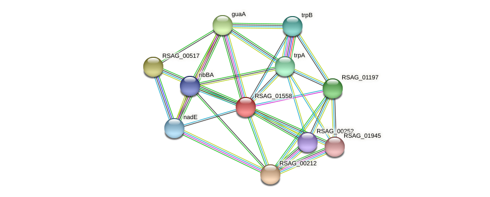 RSAG_01558 protein (Ruminococcus sp. 5139BFAA) - STRING interaction network
