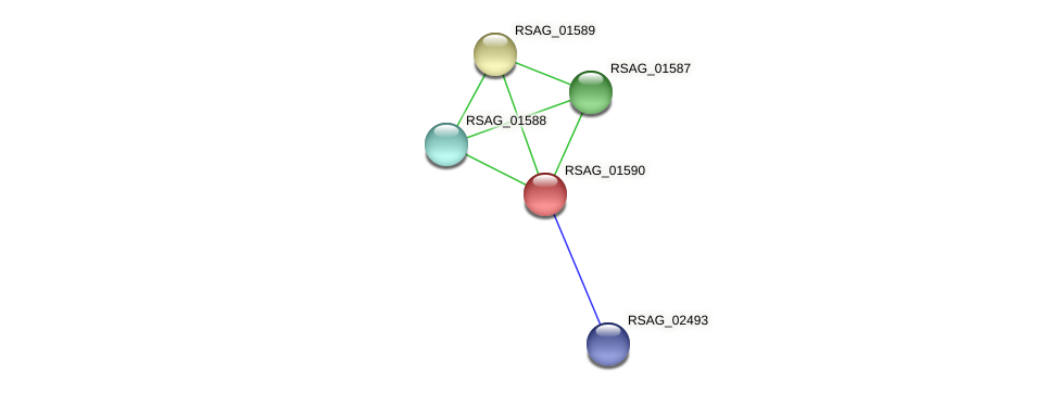 RSAG_01590 protein (Ruminococcus sp. 5139BFAA) - STRING interaction network