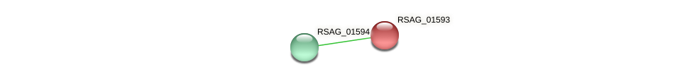 RSAG_01593 protein (Ruminococcus sp. 5139BFAA) - STRING interaction network