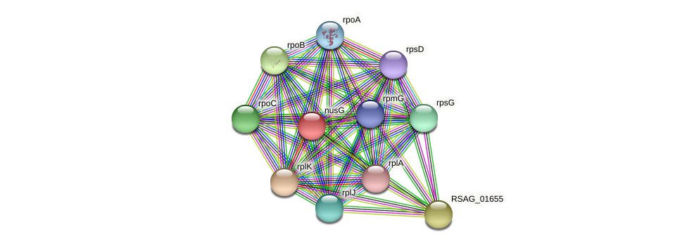 nusG protein (Ruminococcus sp. 5139BFAA) - STRING interaction network