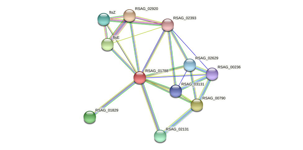 RSAG_01788 protein (Ruminococcus sp. 5139BFAA) - STRING interaction network