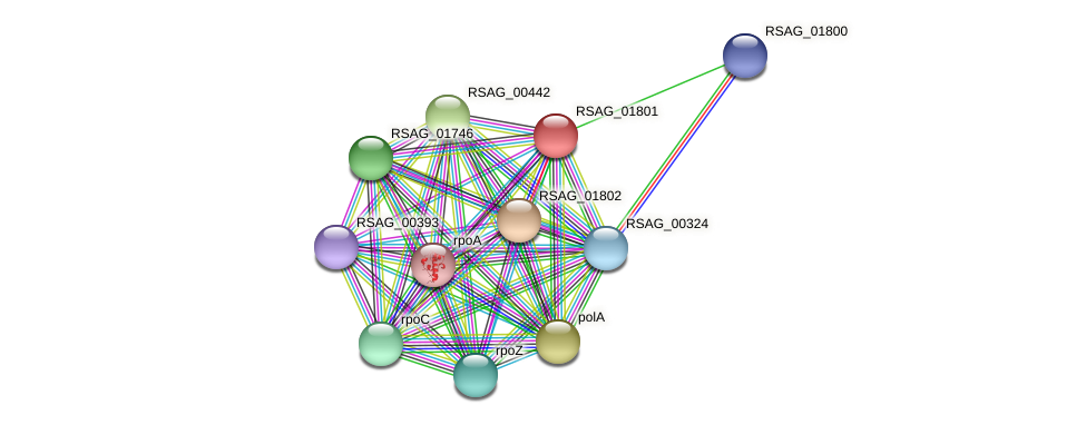 RSAG_01801 protein (Ruminococcus sp. 5139BFAA) - STRING interaction network