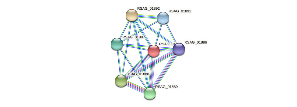 RSAG_01890 protein (Ruminococcus sp. 5139BFAA) - STRING interaction network