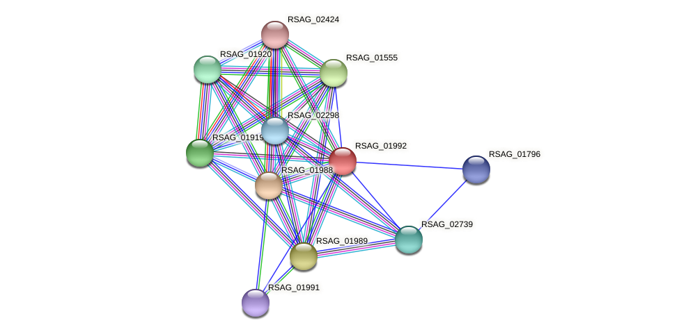 RSAG_01992 protein (Ruminococcus sp. 5139BFAA) - STRING interaction network