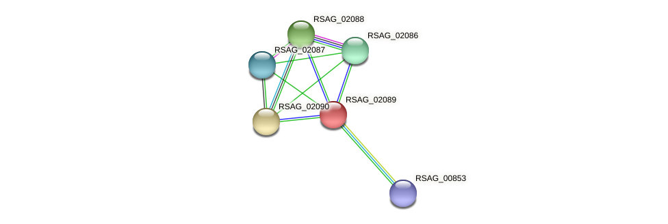 RSAG_02089 protein (Ruminococcus sp. 5139BFAA) - STRING interaction network