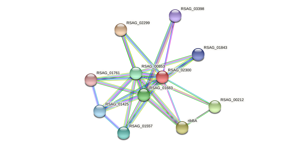 RSAG_02300 protein (Ruminococcus sp. 5139BFAA) - STRING interaction network