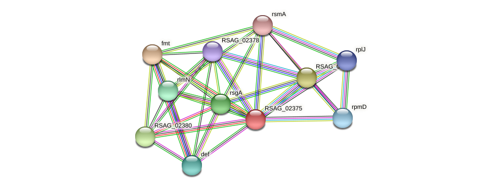 RSAG_02375 protein (Ruminococcus sp. 5139BFAA) - STRING interaction network
