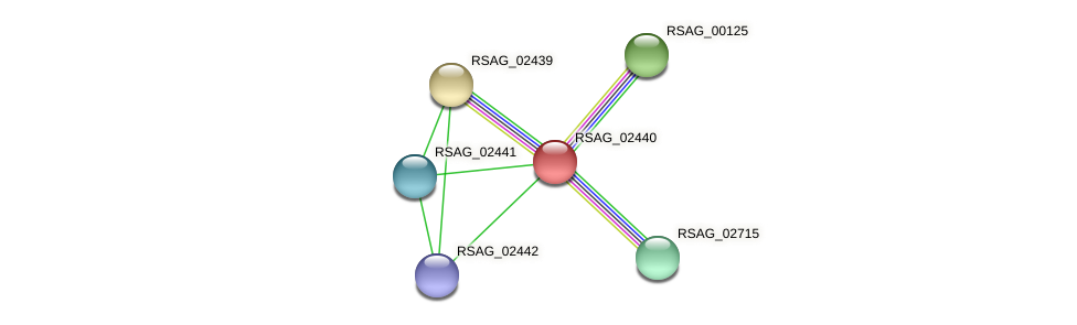 RSAG_02440 protein (Ruminococcus sp. 5139BFAA) - STRING interaction network