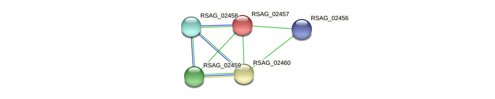 RSAG_02457 protein (Ruminococcus sp. 5139BFAA) - STRING interaction network