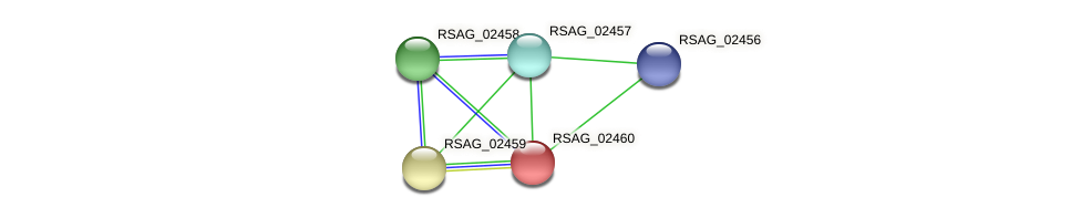 RSAG_02460 protein (Ruminococcus sp. 5139BFAA) - STRING interaction network