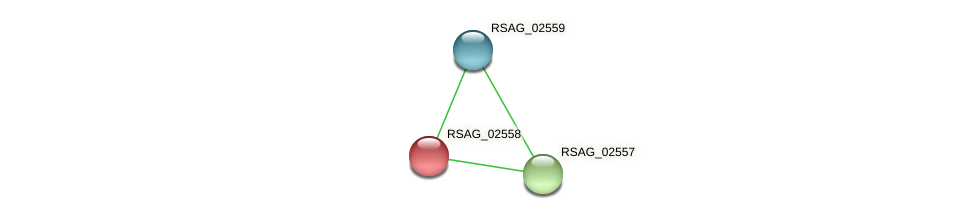 RSAG_02558 protein (Ruminococcus sp. 5139BFAA) - STRING interaction network