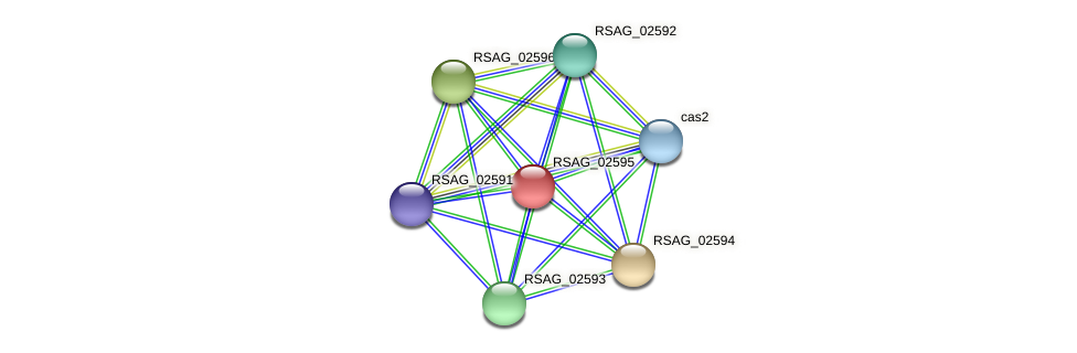 RSAG_02595 protein (Ruminococcus sp. 5139BFAA) - STRING interaction network