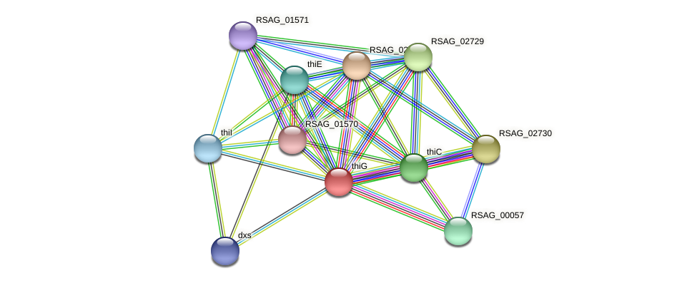 thiG protein (Ruminococcus sp. 5139BFAA) - STRING interaction network