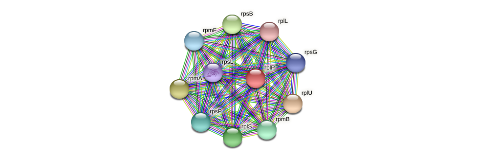 rplP protein (Ruminococcus sp. 5139BFAA) - STRING interaction network