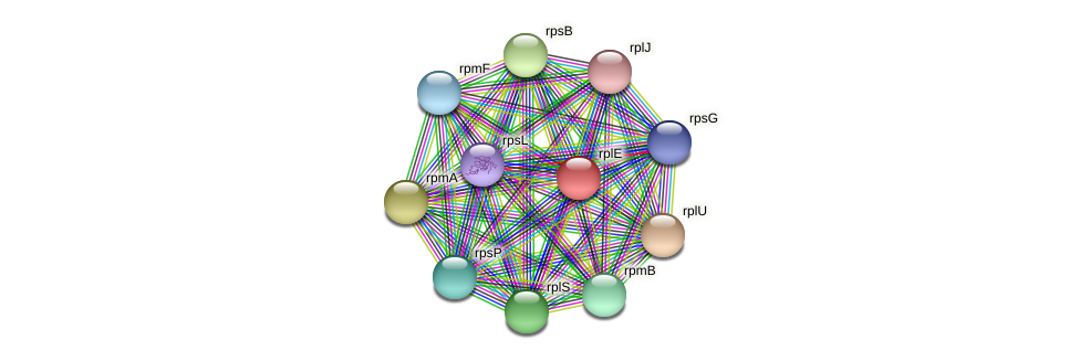 rplE protein (Ruminococcus sp. 5139BFAA) - STRING interaction network