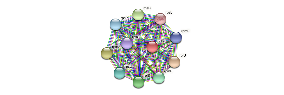 rpsE protein (Ruminococcus sp. 5139BFAA) - STRING interaction network