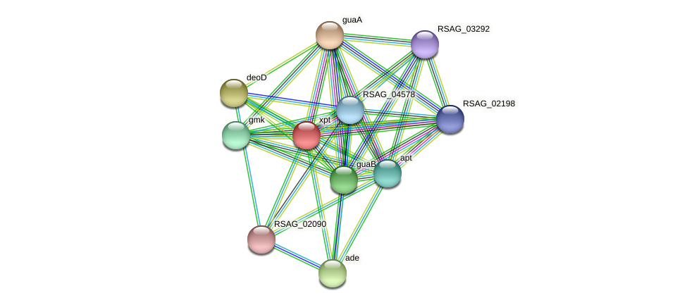 xpt protein (Ruminococcus sp. 5139BFAA) - STRING interaction network
