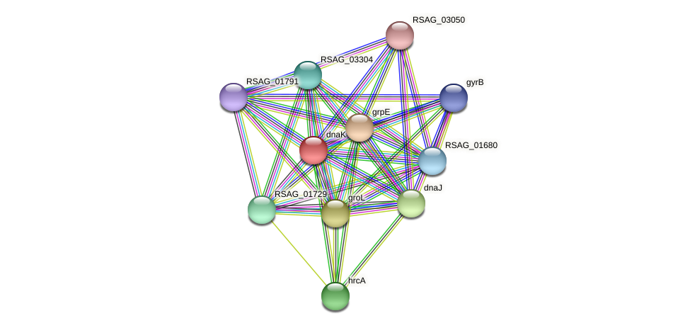 dnaK protein (Ruminococcus sp. 5139BFAA) - STRING interaction network