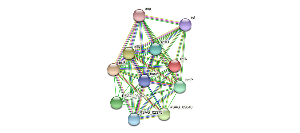 rbfA protein (Ruminococcus sp. 5139BFAA) - STRING interaction network