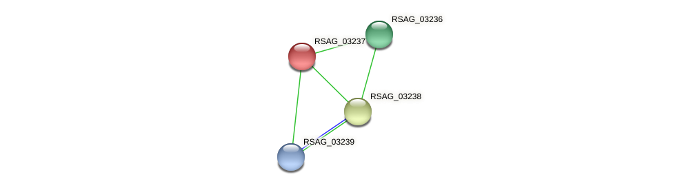 RSAG_03237 protein (Ruminococcus sp. 5139BFAA) - STRING interaction network