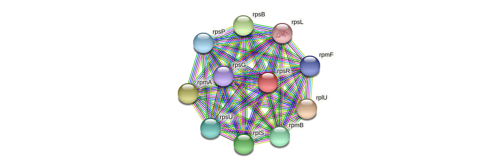 rpsR protein (Ruminococcus sp. 5139BFAA) - STRING interaction network