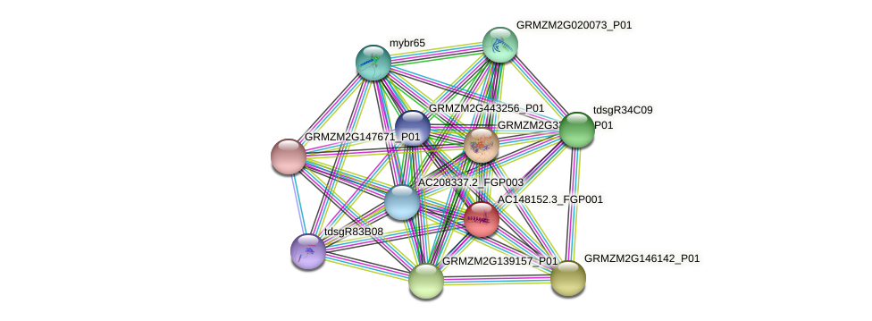 AC148152.3_FGP001 protein (Zea mays) - STRING interaction network