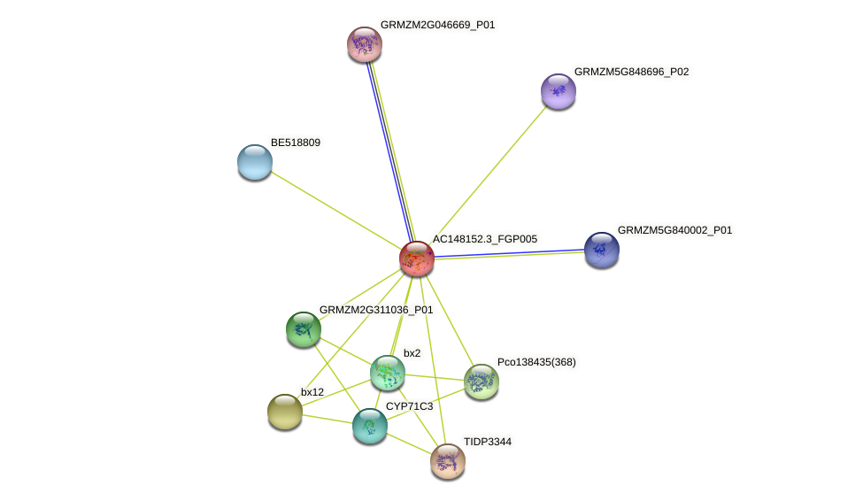 Zm.28347 protein (Zea mays) - STRING interaction network