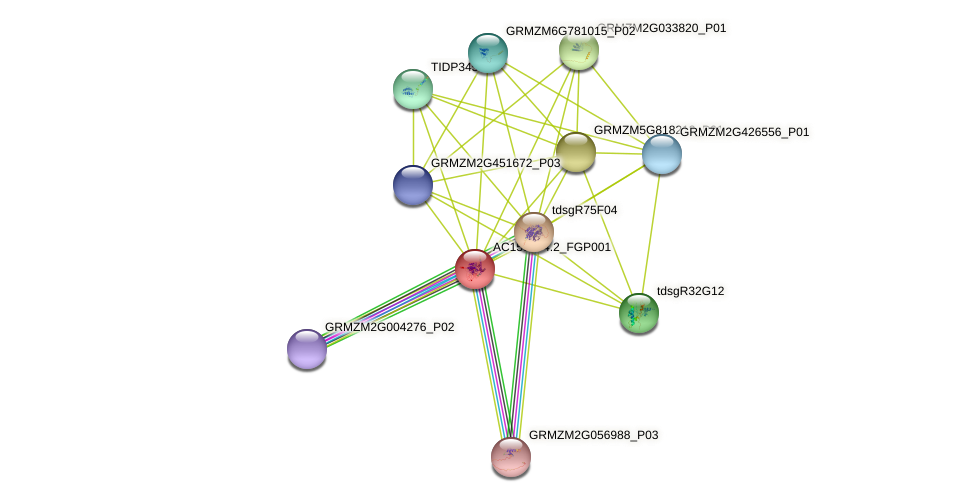 AC155434.2_FGP001 protein (Zea mays) - STRING interaction network