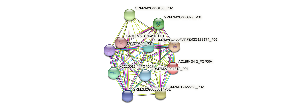 AC155434.2_FGP004 protein (Zea mays) - STRING interaction network