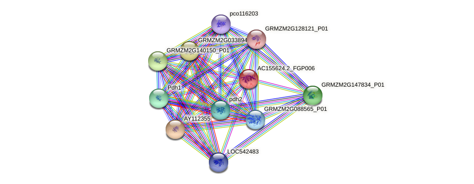 AC155624.2_FGP006 protein (Zea mays) - STRING interaction network