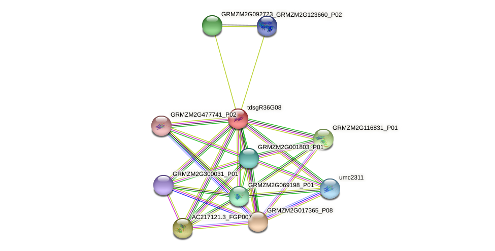 AC182482.3_FGP003 protein (Zea mays) - STRING interaction network