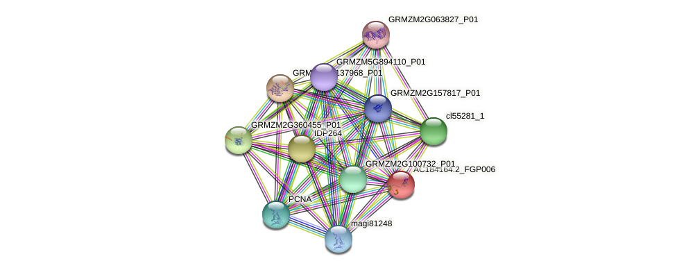 AC184164.2_FGP006 protein (Zea mays) - STRING interaction network