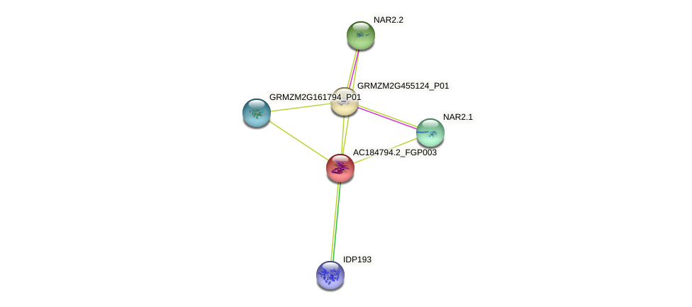AC184794.2_FGP003 protein (Zea mays) - STRING interaction network