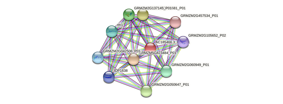 AC185466.3_FGP001 protein (Zea mays) - STRING interaction network