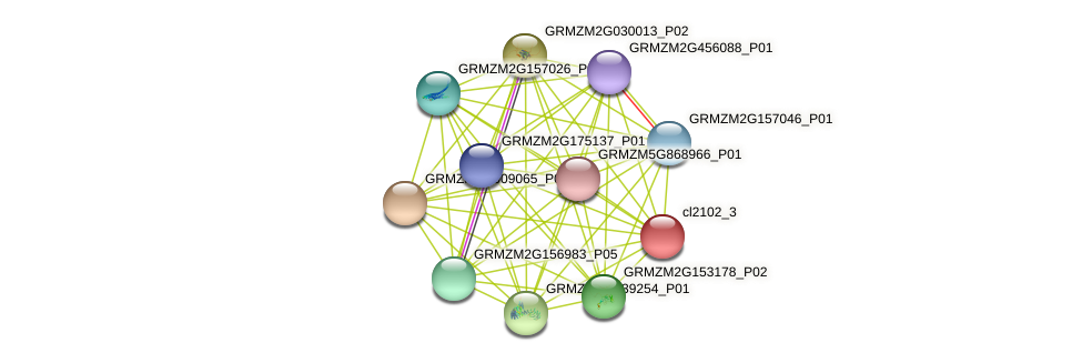 cl2102_3 protein (Zea mays) - STRING interaction network