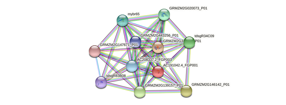 AC191042.4_FGP001 protein (Zea mays) - STRING interaction network
