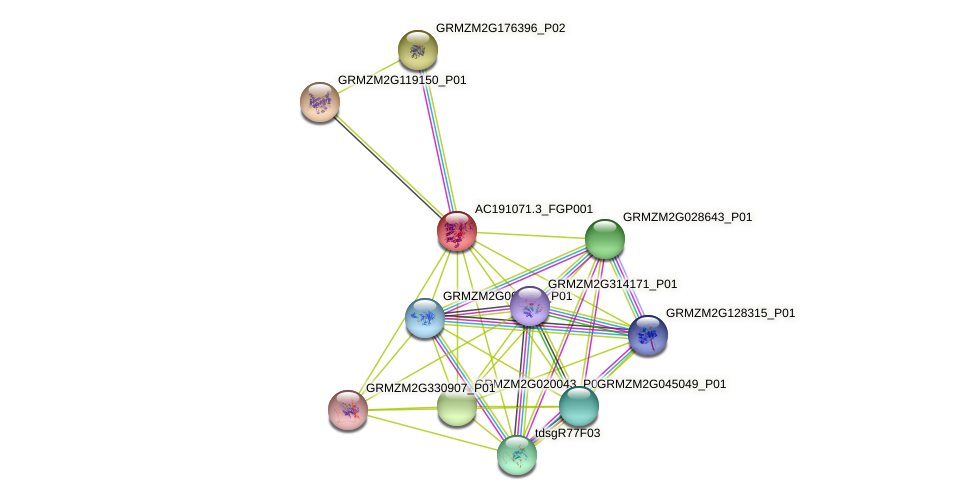 AC191071.3_FGP001 protein (Zea mays) - STRING interaction network