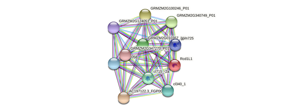 Rcd1L1 protein (Zea mays) - STRING interaction network