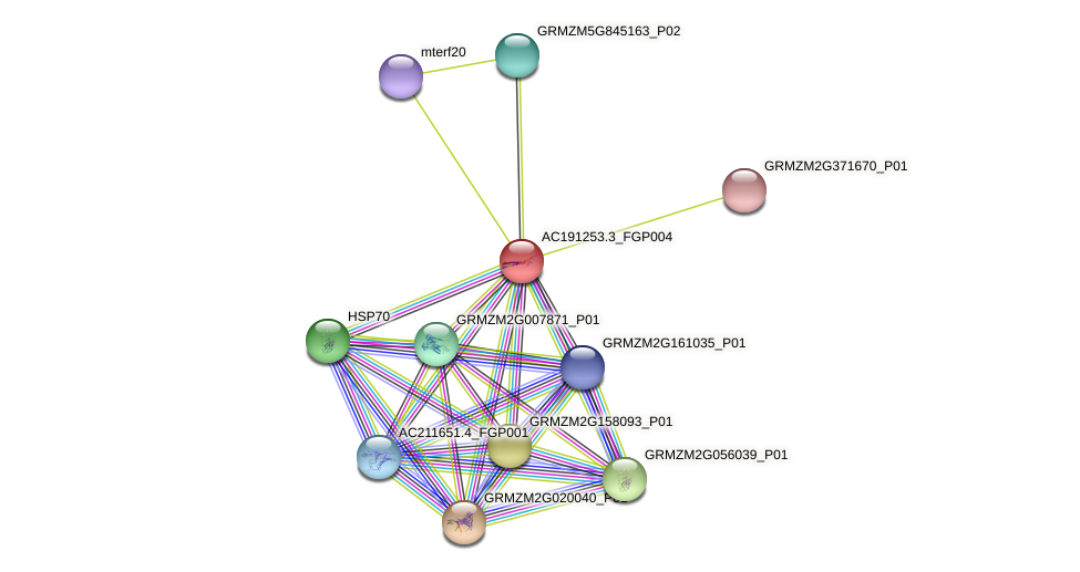 AC191253.3_FGP004 protein (Zea mays) - STRING interaction network