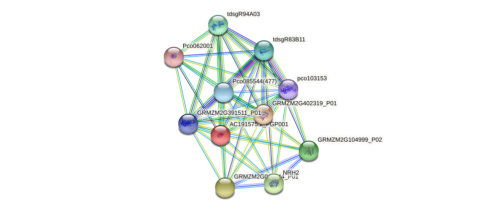 AC191575.2_FGP001 protein (Zea mays) - STRING interaction network