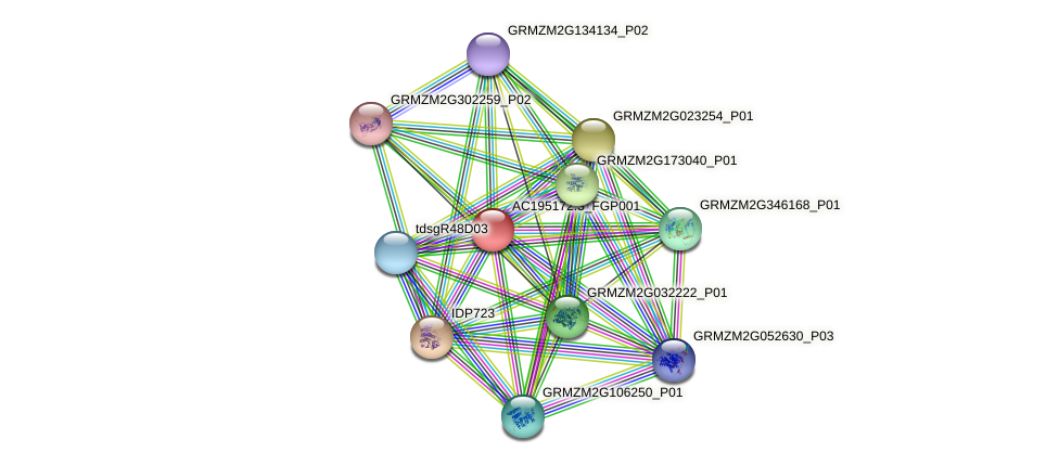 AC195172.3_FGP001 protein (Zea mays) - STRING interaction network