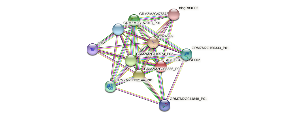 AC195343.3_FGP002 protein (Zea mays) - STRING interaction network