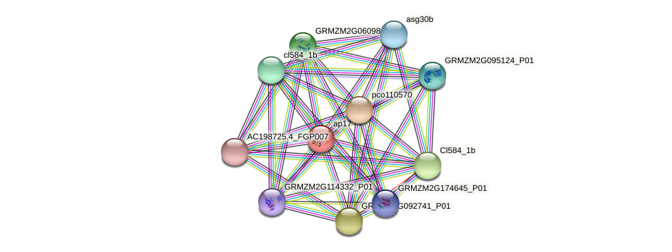 AP-17 protein (Zea mays) - STRING interaction network